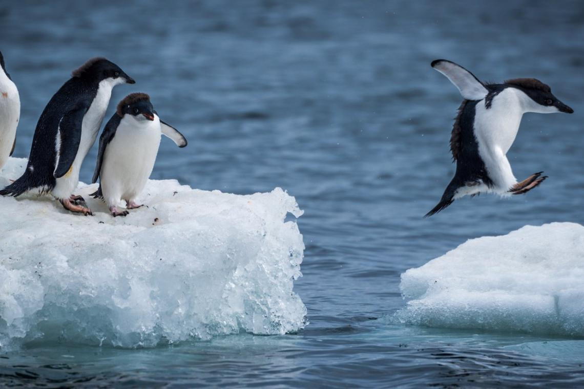 3 Ways to Visit Antarctica, From Photography Journeys to Luxury Ships