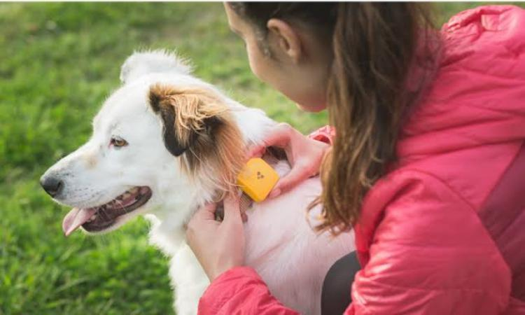 Findsters GPS Pet Tracker Is All Set To Locate Your Missing Pets Without A Monthly Fee