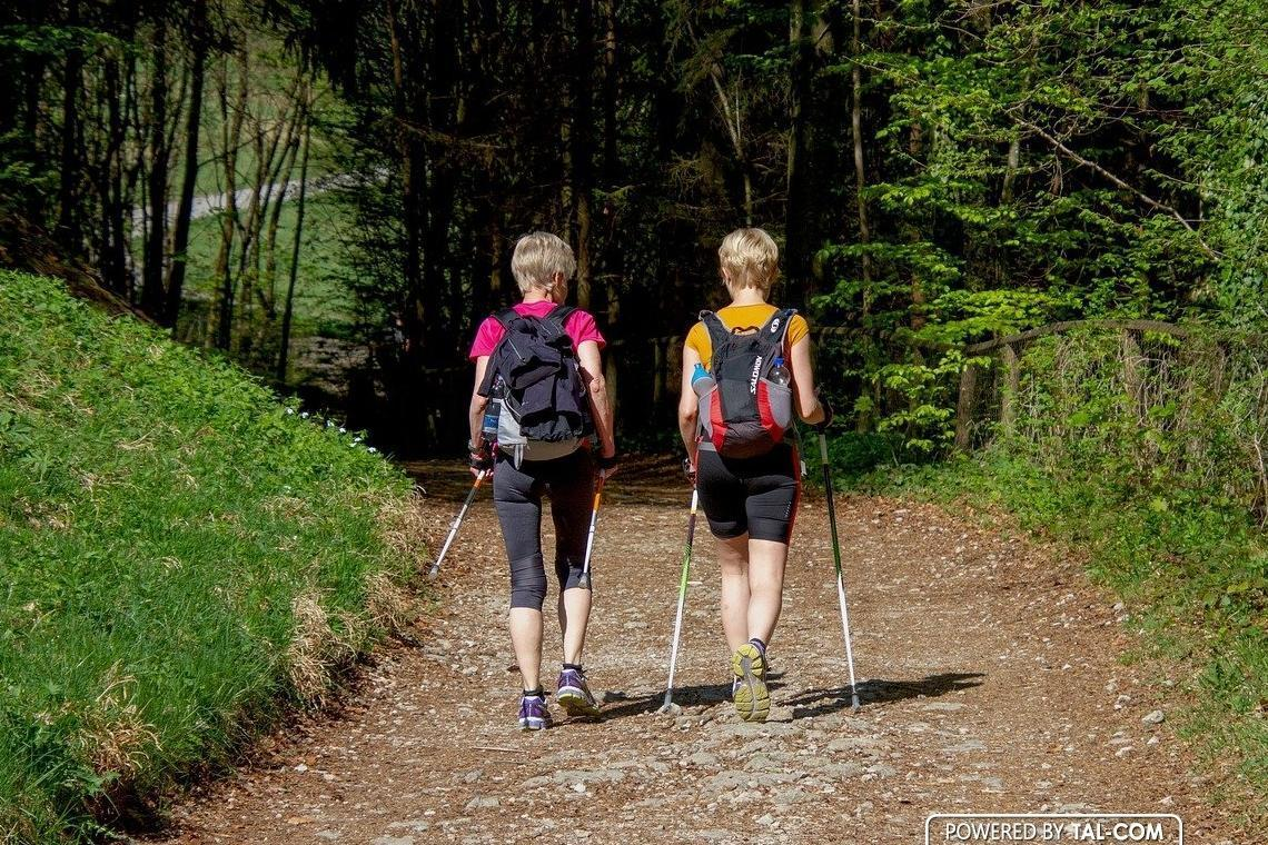 Best Trekking Poles For You To Choose