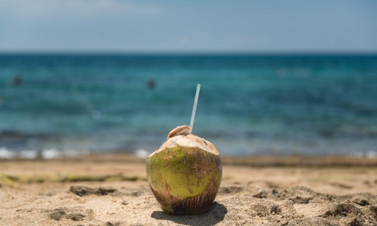 Indonesia / College students in Bali can pay tuition with coconuts